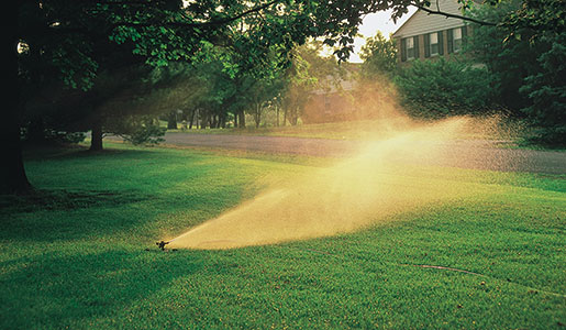 Summer Watering: Make Every Drop Count